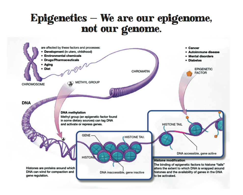 Brain-and-body-epigenetics